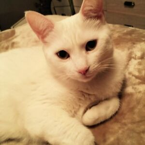 Cat in need of new home