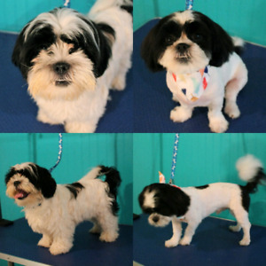 Grooming Available - Coldstream