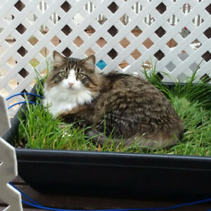 Catios, cat-poofing for yards, & enclosures for cats/small pets