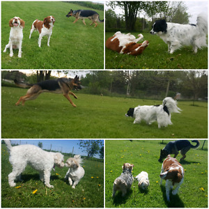 Balanced K9 - Optimal Daycare & Boarding Accepting New Dogs