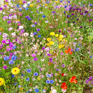 Biodegradable Butterfly & Bee Booster Perennial and Annual Seed Mat 2m x 48cm
