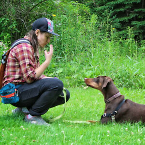 Dog Training - Fun and Effective