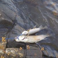 GUIDED HUNTING AND FISHING TOURS