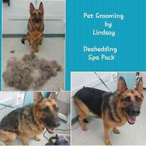 Professional Dog and Cat Grooming Cambridge Kitchener Area image 8