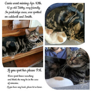 Lost 12 year old Tabby in parkridge area