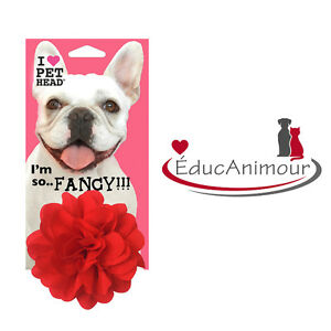 SO FLY! PET HEAD - FLEUR ROUGE pour chien ou chat