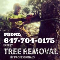 Tree removal  647-704-0175 stump cutting removal.