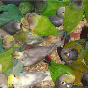 EXOTIC PETS TORONTO~~~ COME RESERVE YOUR BABY PARROT!
