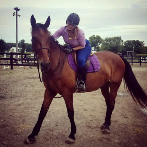 Free horse lease/horse back riding