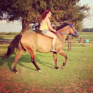 Horses Available for Coboarding Cambridge Kitchener Area image 7