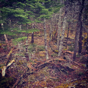 Woodlot wanted: will pay up to 5500