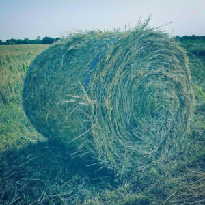 2017 Hay/Green feed/Straw Bales