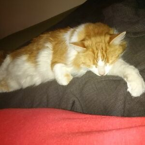2 adult cats free to good home
