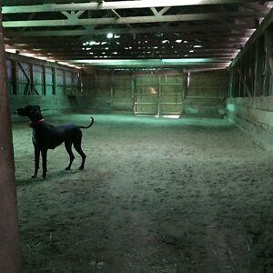 Barn with two horse stalls for rent Belleville Belleville Area image 5