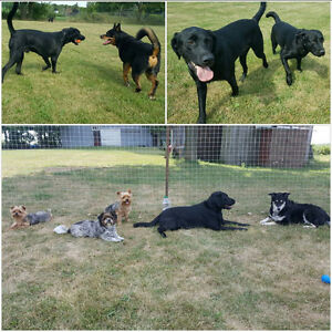 Balanced K9 Living - The Optimal Boarding Stay for all Dogs Stratford Kitchener Area image 4