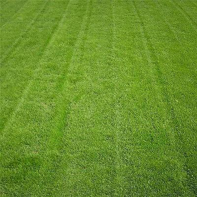 Tall Green Grass (Tall Fescue Green Grass Seed Festuca Arundinacea Lawn Field Turf Seeds 10000Pcs)