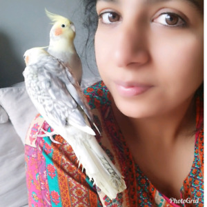 Bird parrots HOLIDAYS SPECIAL AFRICAN SITTER with lots of love