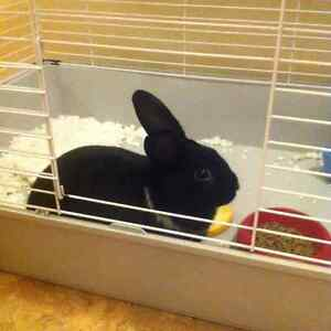 Lovable bunny looking for a great home.