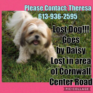 OVLPN - Lost dog in Cornwall