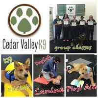 Professional Dog Training & Fun Classes!