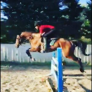 cheval de 7 ans a vendre