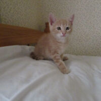 We have 4 beautiful  kittens what are looking for a loving home