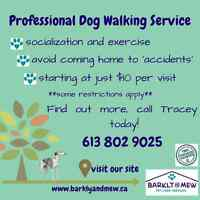 Professional Pet Sitting and Dog Walking.  Insured and bonded.