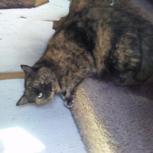 Spayed female in urgent need of a home.