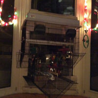 Female Budgie with cage and toys