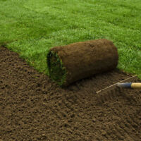Lawn Repair, Grass Replacement, New Sod, Seeding