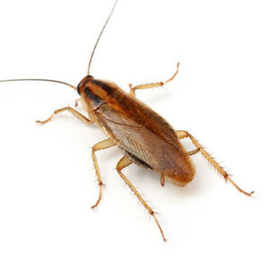 WE KNOW HOW TO TREAT PESTS! 647 961 7426