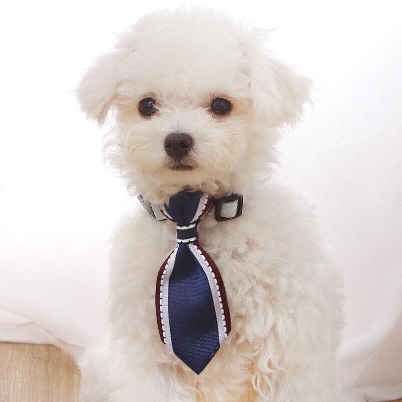 Dog Cat Tie Collar Adjustable – Buckle Puppy Kitten Silver Bell ~ Super Cute!! Collars
