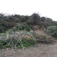 BRANCHES & JUNK REMOVAL LOW PRICE 780 807 7634