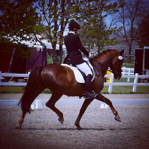 Dressage clinic with FEI Rider, Briannon Johnson