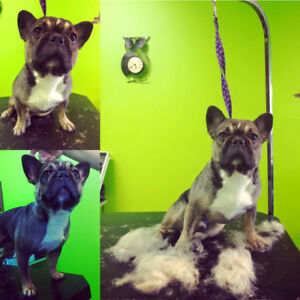 Pet grooming find or advertise pet animal services in calgary dog and cat grooming solutioingenieria Gallery