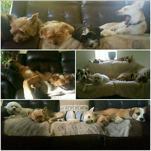 Dog Daycare Like No Other!! Leaders of the Open Concept Daycare