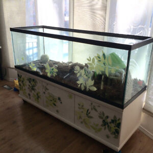 Turtle / Tortoise Tank and Full Supplies
