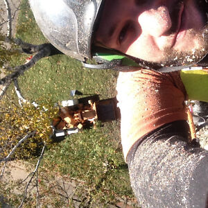 TOP NOTCH TREE SERVICE !!TREE REMOVAL 50% OFF STUMP GRINDING!! London Ontario image 2