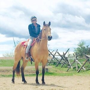 11 year old Buckskin QH mare for full/part lease