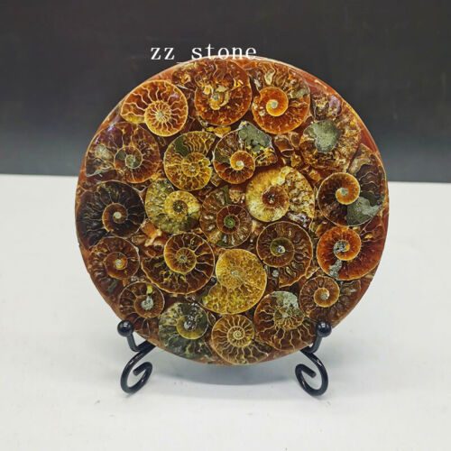 1PC Natural Ammonite Disc Fossil Conch Madagascar Specimen Healing + Stand