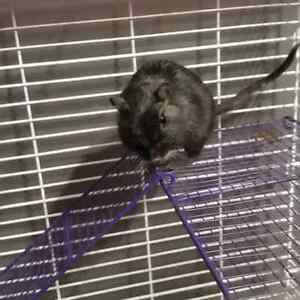 Gerbil with accessories