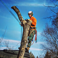 Tree removal, chipping and disposal.