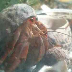 Hermit crab rescue GTA ( and other exotic pets)