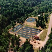 Cabin and fish farm on 8 acres!