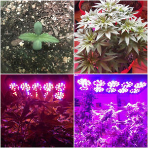 Lampes de croissance alpha 8 LED GROW LIGHT - FULL SPECTRUM 280w