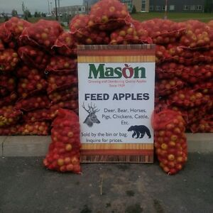DEER APPLES, BEAR APPLES, ANIMAL FEED APPLES