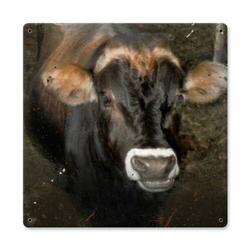 BLACK WHITE FACE WITH BROWN COW FARM HOUSE DECOR HEAVY DUTY USA MADE METAL SIGN
