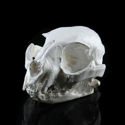 Resin Realistic Replica Cat Skull Model Medical Paint Party Bar Prop Decor
