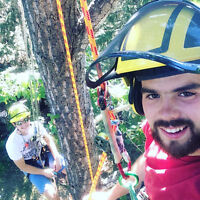 Tree Removal and Pruning - ISA Certified Arborists!