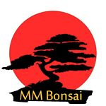 MM Bonsai